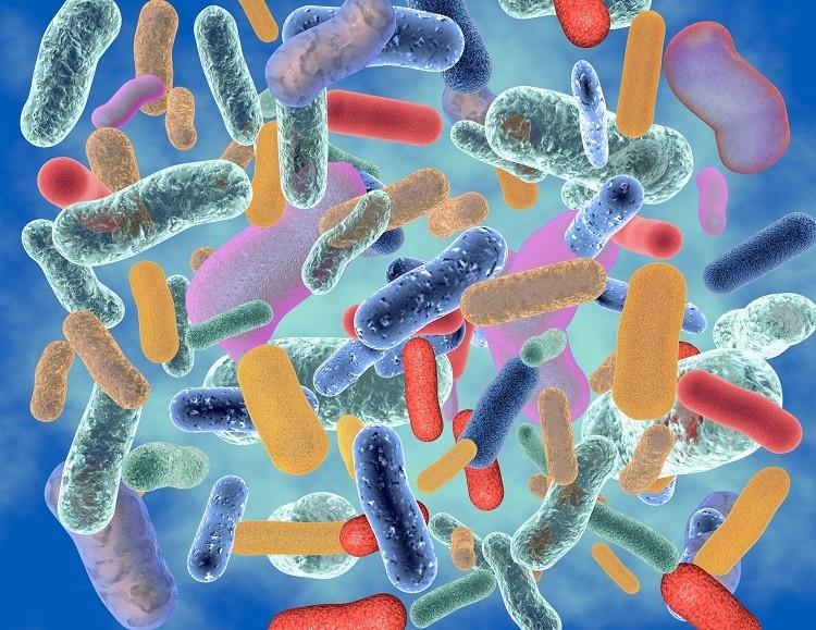 microbioom, gut flora